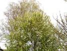 Посмотреть все фотографии серии Весна 2012