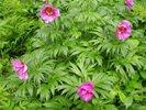Посмотреть все фотографии серии тюльпаны