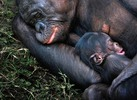 Посмотреть все фотографии серии Other Animals