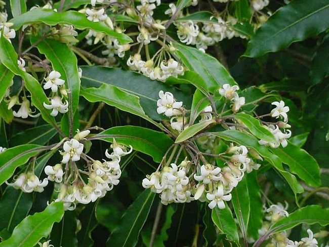 Мирра - мягкий антидепрессант, который помогает справиться со стрессовым состоянием и бессонницей. Этот аромат навевает спокойные сны.