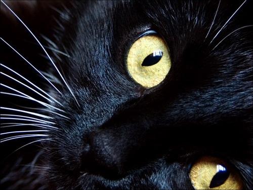 Не подпишу.  Подпишет.  Тема: Кошки Тип: Исходники Кол-во: 17+бонус Цена...