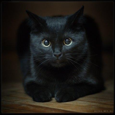 7. Животные Чёрная кошка - Берти.  Наверное, лучшая подруга, с которой...