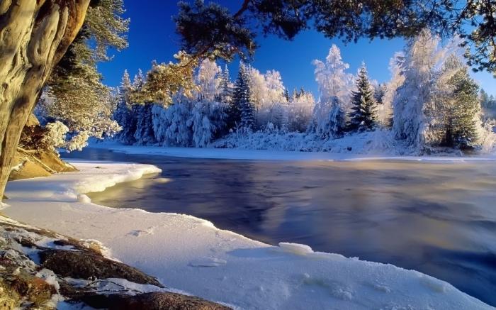 Картинки живая природа зима