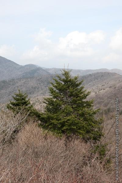 Я послушалась и ради защиты природа принялась фотографировать всякие елки.