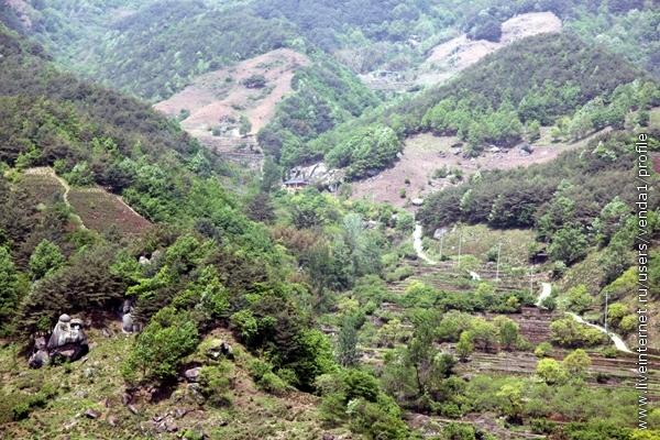 А на противоположном склоне ущелья - террасы с ровными рядами чайных кустов, как и положено на плантациях.