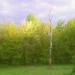 """Весна 2011. Полянка возле Храма """"Покрова Пресвятой Богородицы в Медведково"""""""