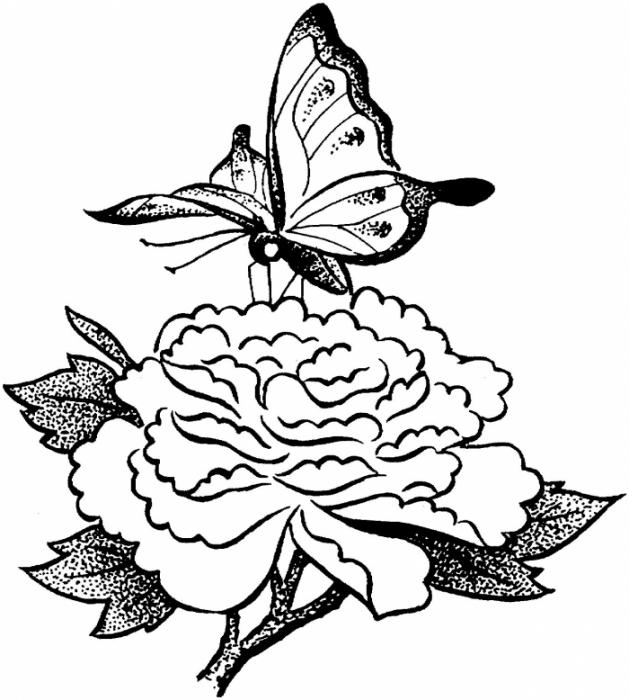 Картинки бабочек и цветов раскраски 7