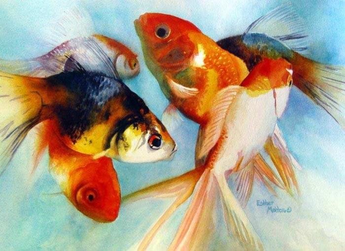 Золотая рыбка, рыба, фэншуй,