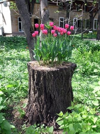 Например, вместо этой прекрасной клумбы на пеньке - садовый столик и круг гостей... или выкорчевать его...