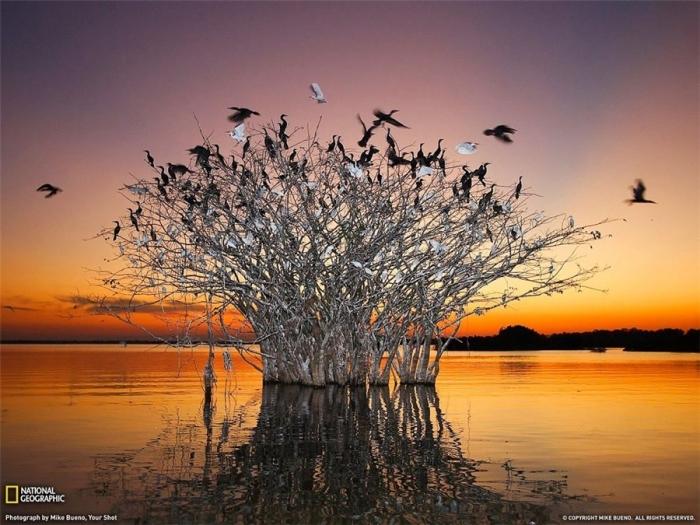 Pantanal.Braziliya