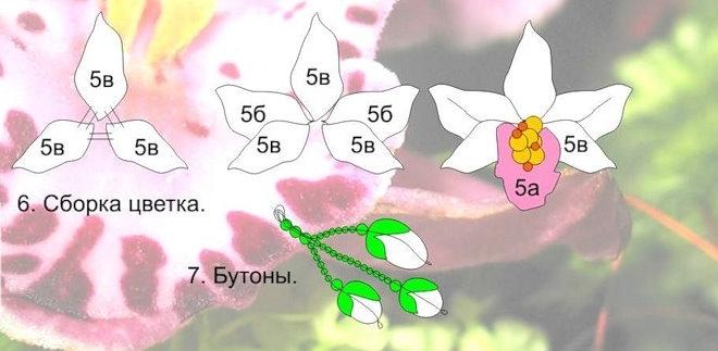Орхидея Из Бисера.  Схема.