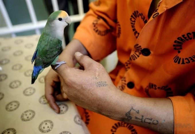 Попугайчик уселся на палец заключенного, участвующего в экспериментальном проекте.