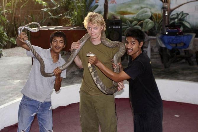 Королевская кобра – самая крупная из ядовитых змей, ее длина может достигать 6 метров.