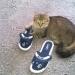Это Люба. Год назад забрали ее с котятами из подъезда. Котят вылечили ,раздали,а Люба живет у нас.