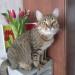 Это Пипл в свой День рождения. ему 14 марта исполнился год.