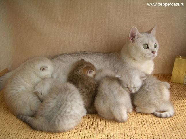 Правильное воспитание кошек. Поведение кошек и психология кошек. Все о бо