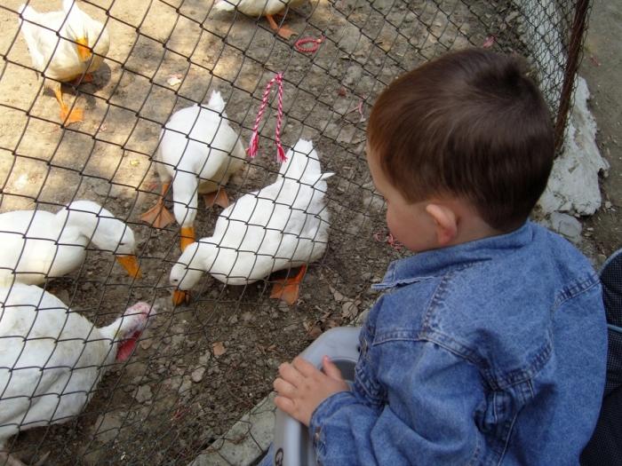 Как мы любим домашних птичек!
