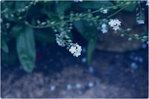 [+] Увеличить - Вы - счастливы, когда видите цветок и благодарны ему за это мгновенье жизни.
