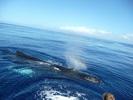 Посмотреть все фотографии серии Морские животные. Киты.