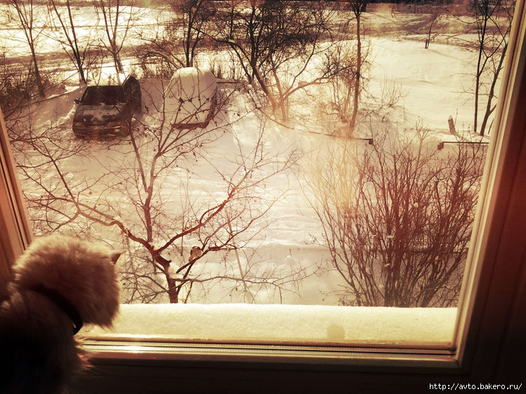 Ванильная фотка Кошка