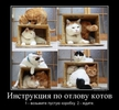 [+] Увеличить - Инструкция по отлову котов