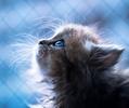 [+] Увеличить - Даже кошки смотрят в небо!