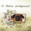Посмотреть все фотографии серии Мои собаки