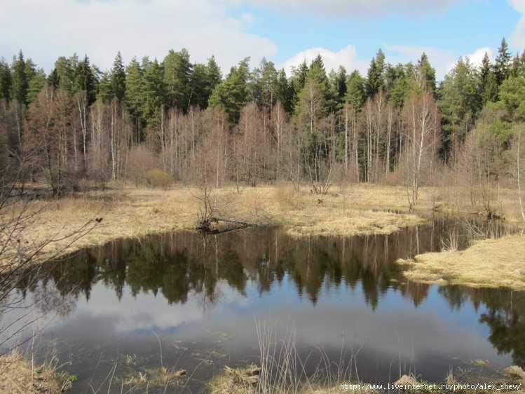 рыбалка в алмазово московской области