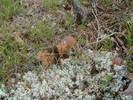 Посмотреть все фотографии серии Тихая охота