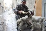 [+] Увеличить - Кормление козлят в Алеппо, Сирия. Saad Abobrahim/Reuters