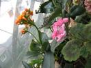 Посмотреть все фотографии серии балкон с цветами
