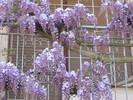 Посмотреть все фотографии серии Цветы итальянского дворика