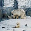 Посмотреть все фотографии серии Московский зоопарк