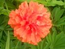 Посмотреть все фотографии серии Моя душа-цветы