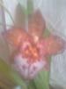 Посмотреть все фотографии серии Зацвела моя орхидея!