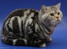 Фото кошек.  Кошки.  Фотографии Iren_Yusuf.