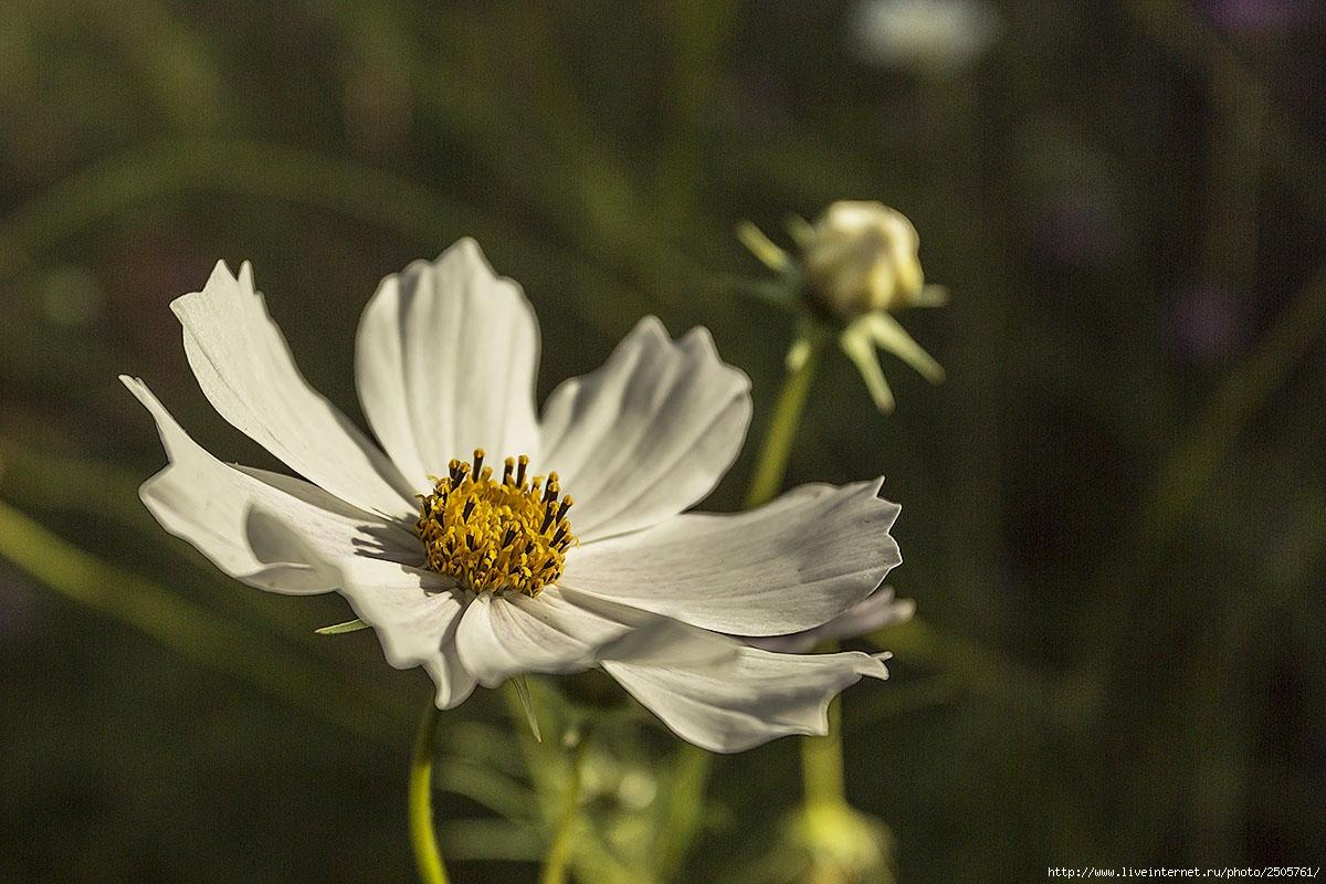 f 21206088 - Fresh Flowers