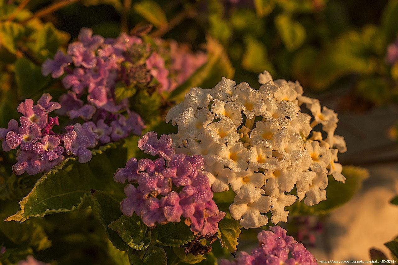 f 21238924 - Fresh Flowers