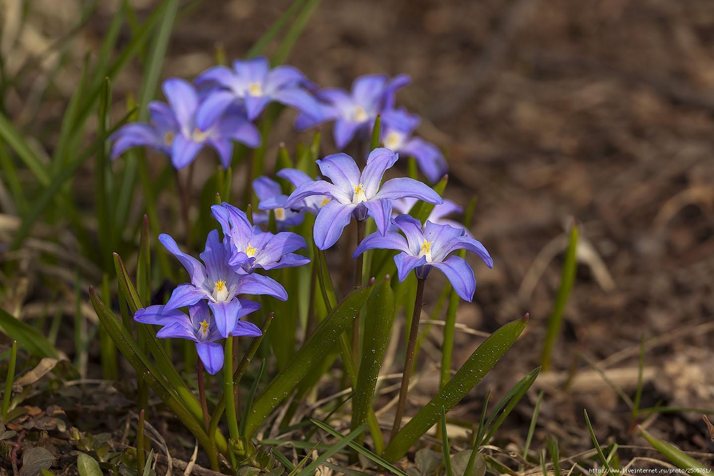 f 21288259 - Fresh Flowers