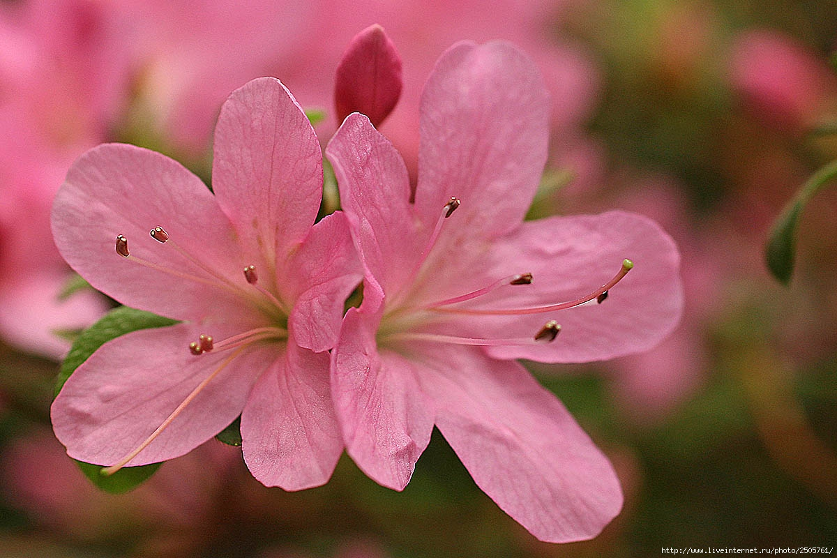 f 21378994 - Fresh Flowers