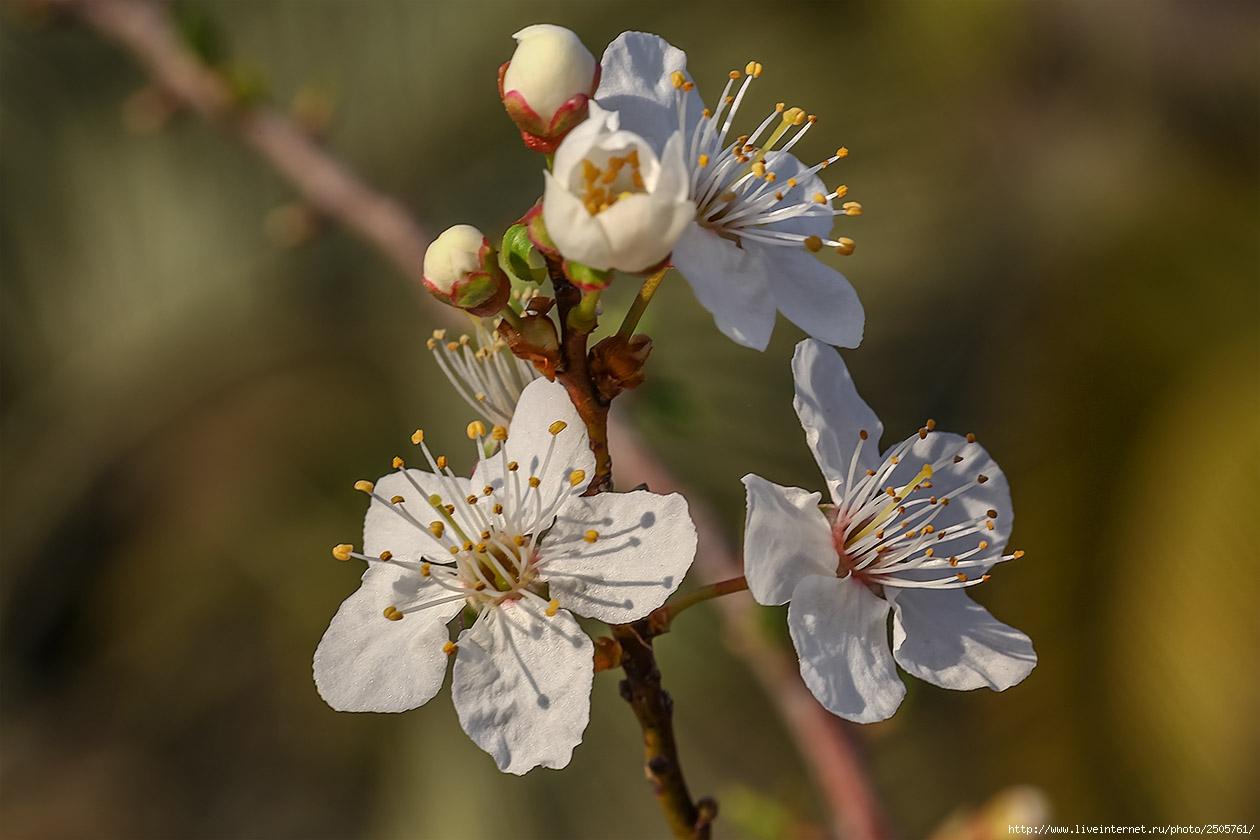f 21390605 - Fresh Flowers