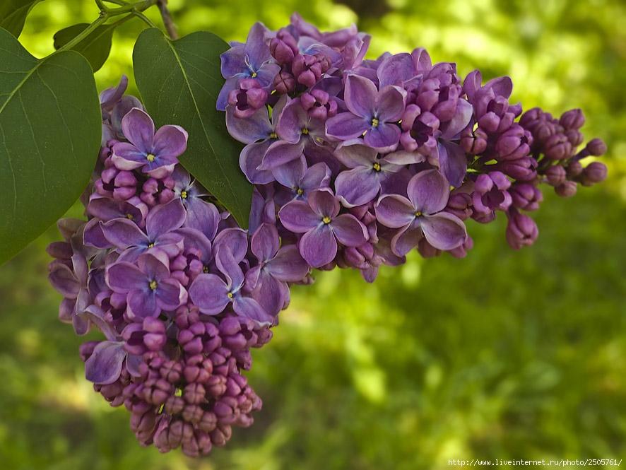 f 21397095 - Fresh Flowers