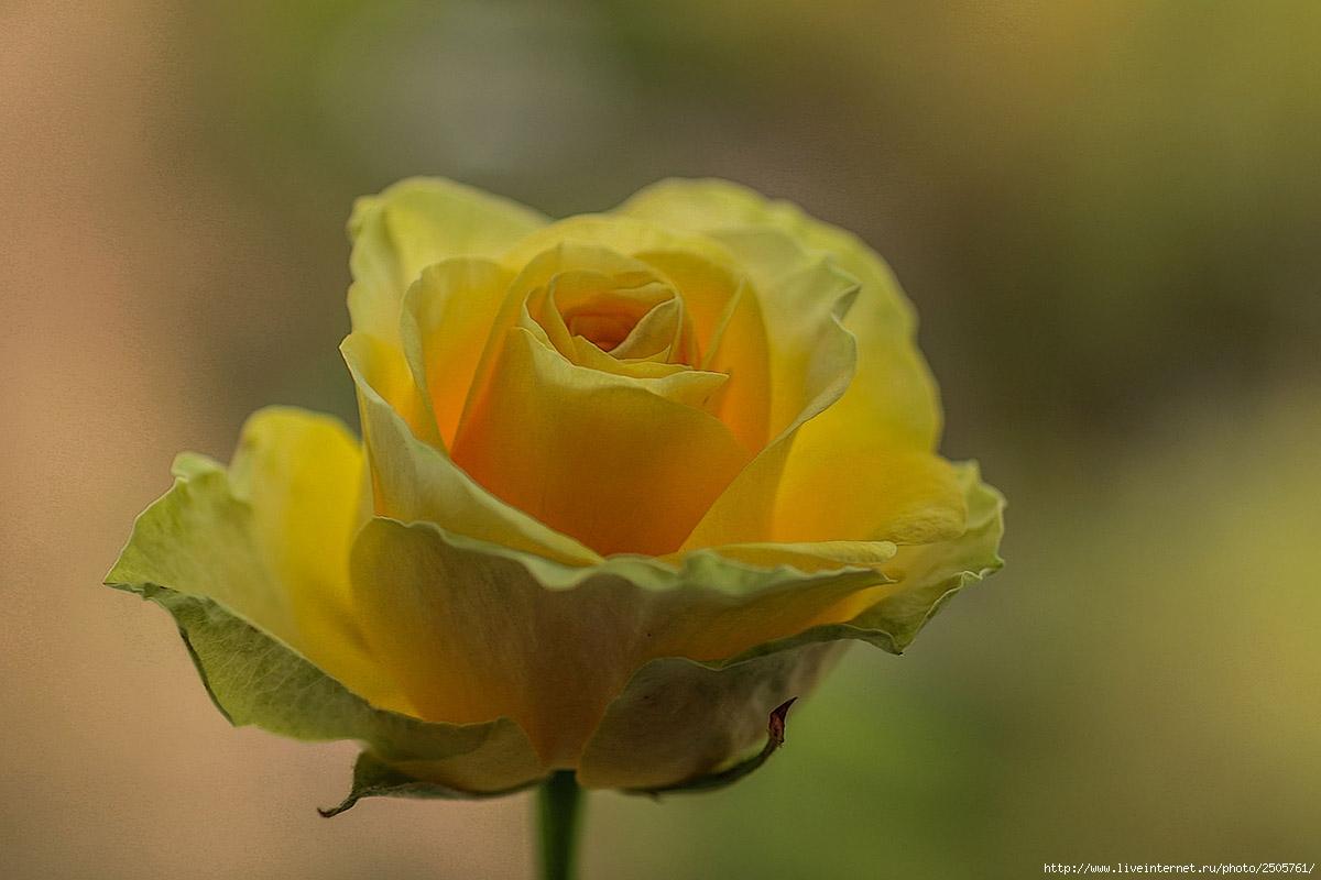 f 21404639 - Fresh Flowers
