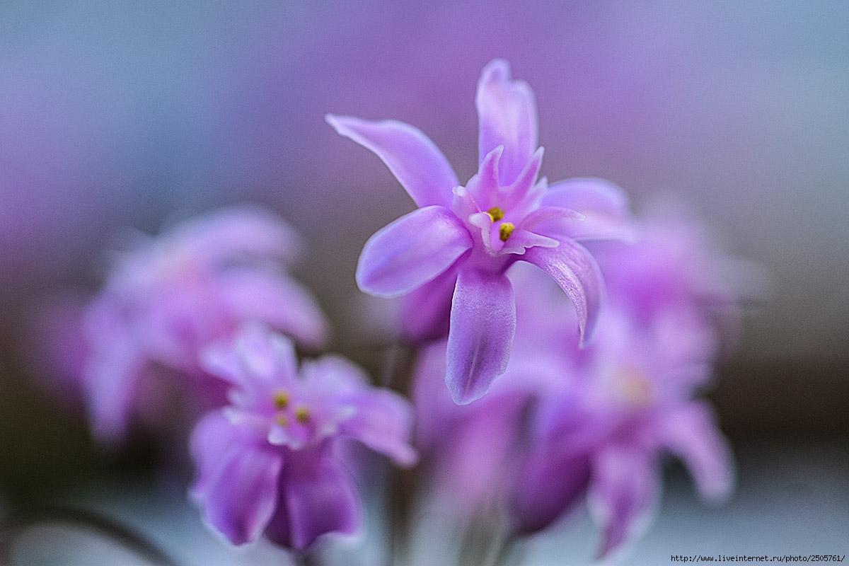 f 21404756 - Fresh Flowers