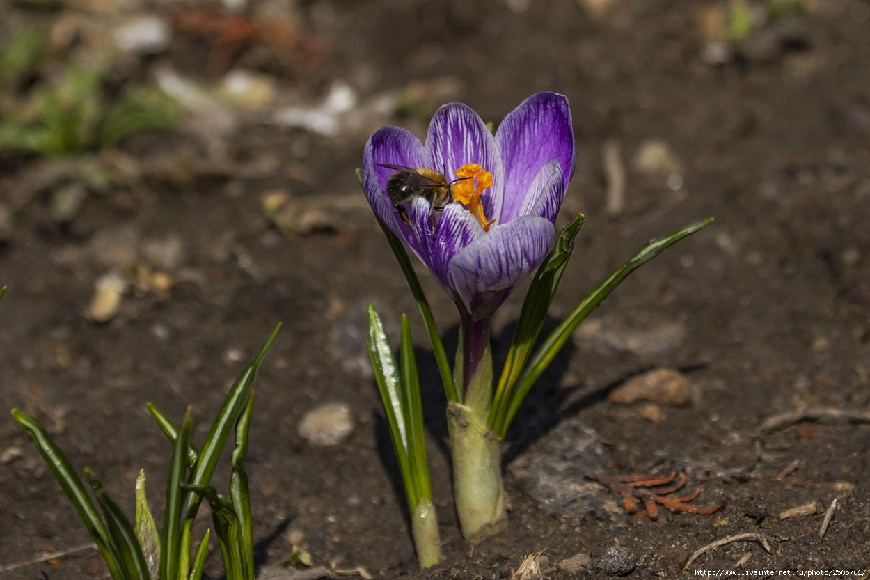f 21420628 - Fresh Flowers