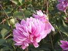 Посмотреть все фотографии серии Цветочки