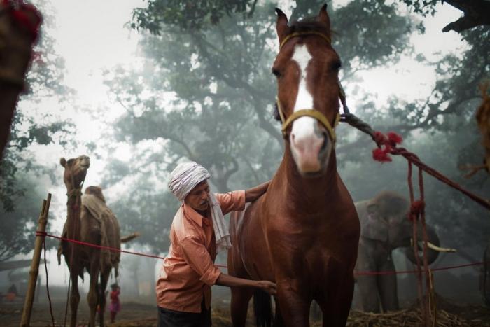 Фотоаольбом: Индия 12