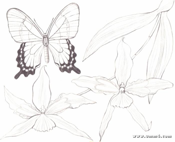 Бабочки и цветы картинки раскраски 3