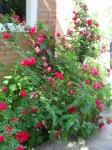 Розы.. Вы вырастаете из одного семени - сердца, и разрастаетесь в мириады лепестков речи - в мириады слов...