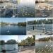 чайки на Лебедином озере